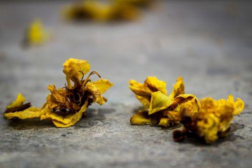petals spread photograph