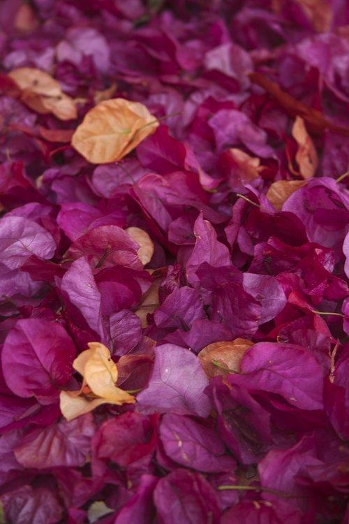 petals  flowers  aroma