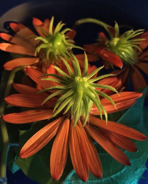 petals orange petals orange