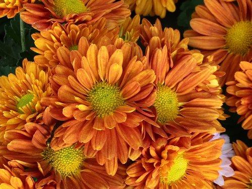 petals orange  flowers oranges  stamens