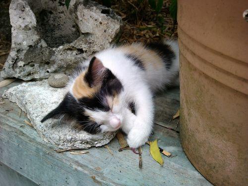 petit cat nap
