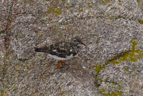 Little Seabird