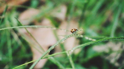 petite  nature  ladybug