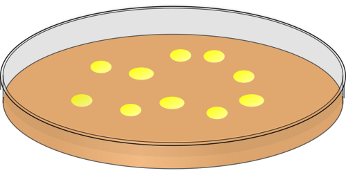 petri dish bacteria laboratory