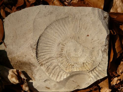 petrification snail shell