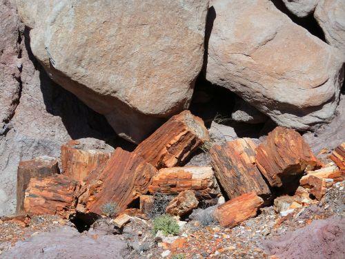 petrified petrified wood opal wood