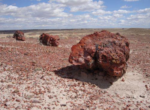 petrified forest national park petrified fossils