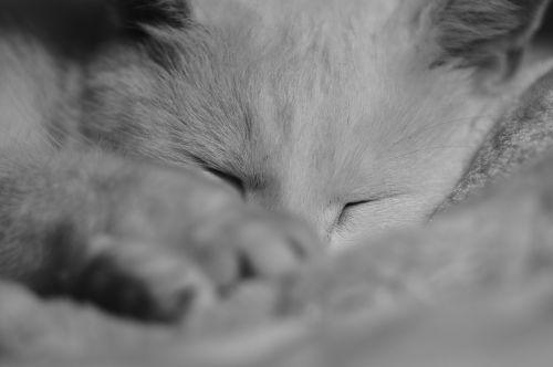 pets sleeping cat sleep