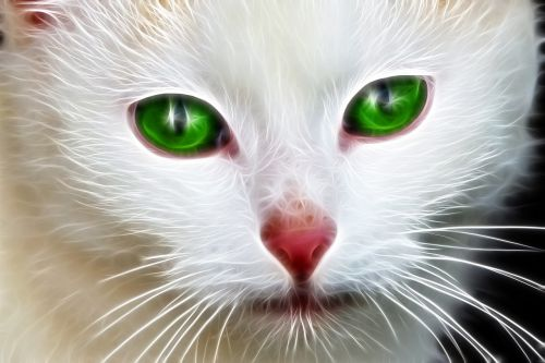 pets white green eyes