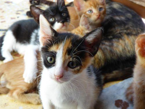 pets cats gat