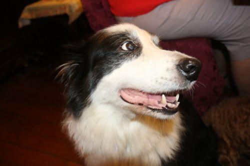 pets dog canine