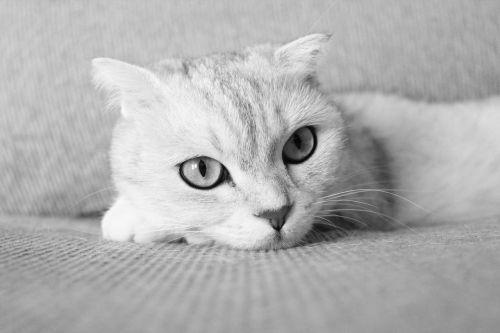 pets cat folds