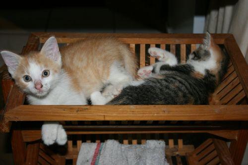 pets kittens sleep