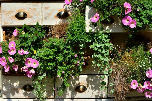 petunia balcony plants summer flowers