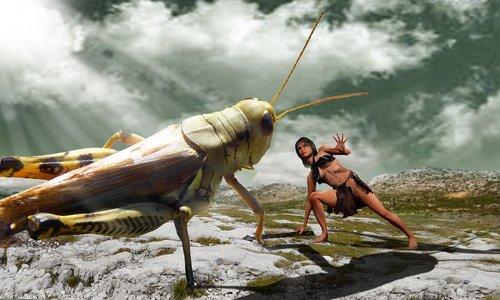 phobia  grasshopper  combat