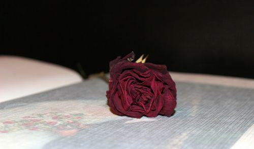 photo album dried rose wedding album