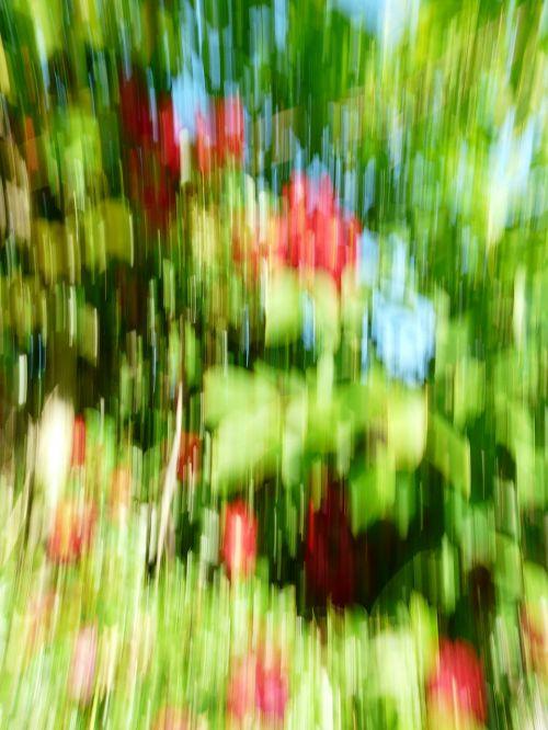 photo art filter movement