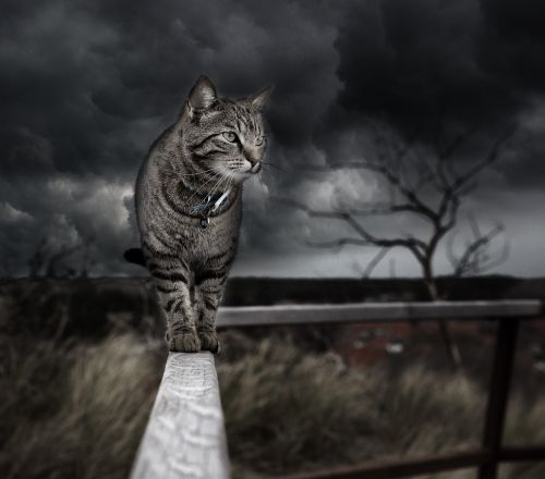 photo manipulation cat photoshop