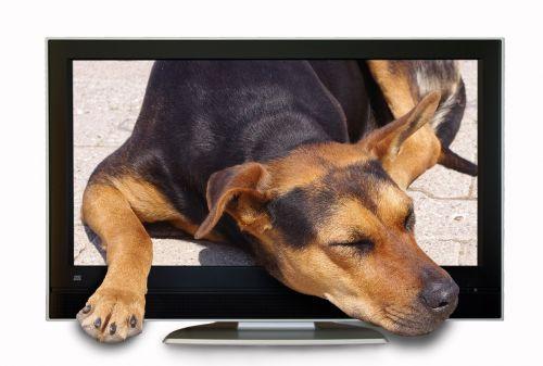photo montage composing dog