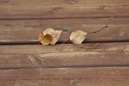 photographic background fall nature