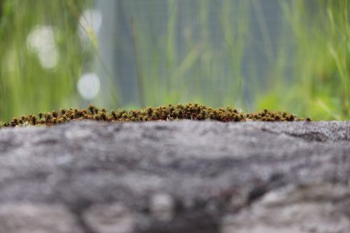 photographic background moss nature