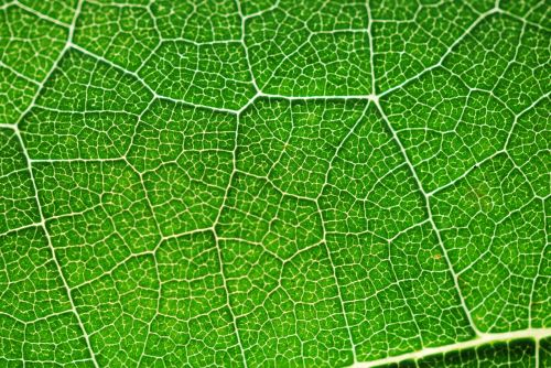 photosynthesis green color