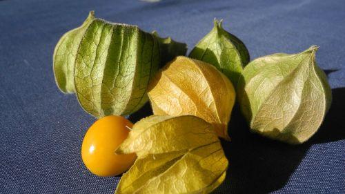 physalis cape gooseberry fruit