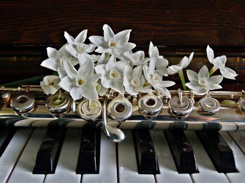 piano flute jonquils