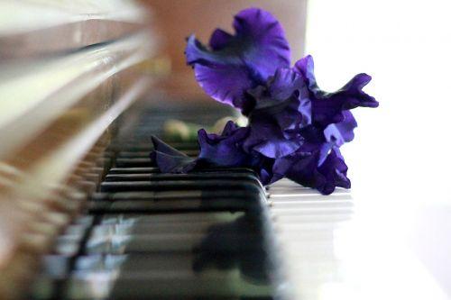 piano iris on piano piano keys