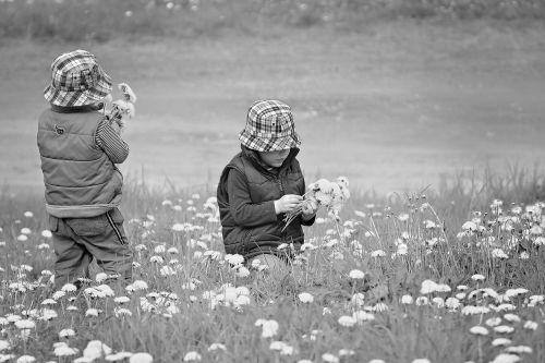 pick flowers children meadow