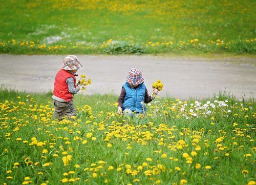 pick flowers children human