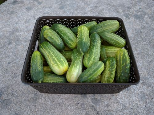 pickles food orchard