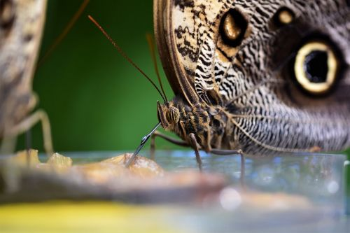 picnic butterfly nature
