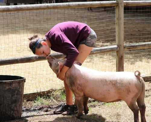 pig  kiss  petting
