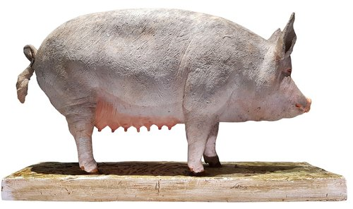 pig  model  agriculture