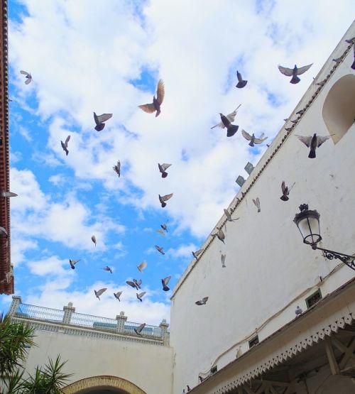 pigeon the medina tunis
