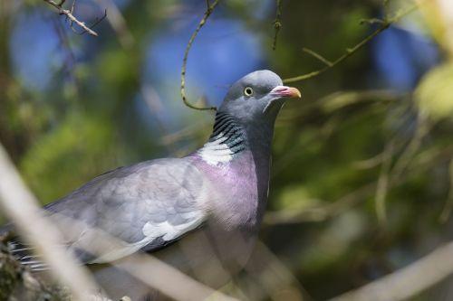 pigeon bird wildlife