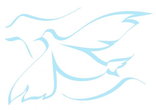 pigeon dove peace dove