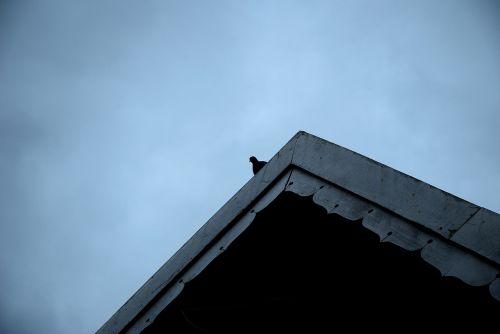 balandis,vienišas,vienas,vienas,vienas,niūrus,balandis,stogas,poilsio,taika,žiūrėti,ieškoti,laukimas,pavargęs