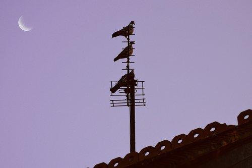 pigeon  moon  roof