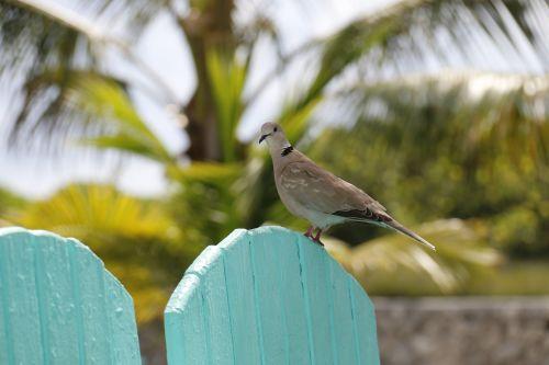 pigeon bird nature