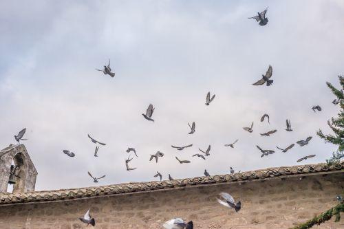 pigeons fly church
