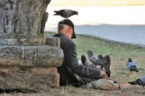 pigeons feed birds
