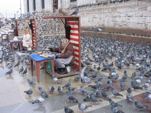 pigeons istanbul feeding