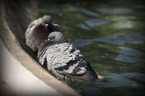 pigeons pond fauna