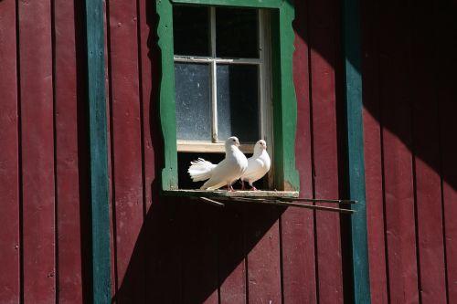 pigeons pigeon house zoo