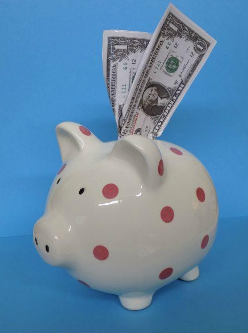 piggy bank pig bank
