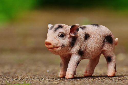 piglet figure cute