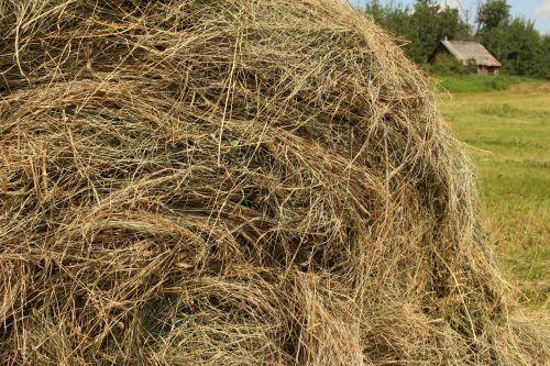 Blyškiai, Ar yra, Firma, Pele Off Off Farm