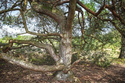 pine heathland nature reserve